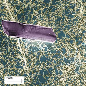 carbon nanotubes and human hair