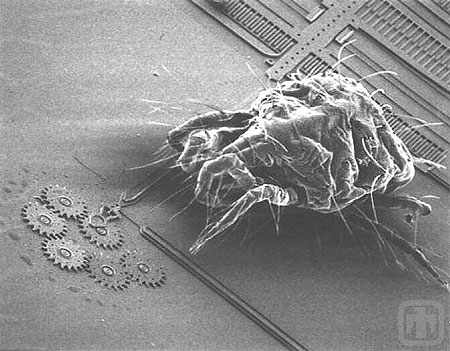 A mite, less than 1 mm in size, approaching a microscale gear chain