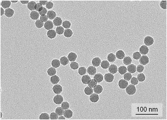 STED Fluorescent Nanobeads