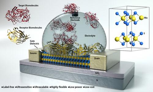 Concept art of a molybdenum disulfide field-effect transistor based biosensor