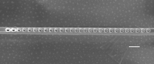 A scanning electron microscope image of a diamond photonic cavity