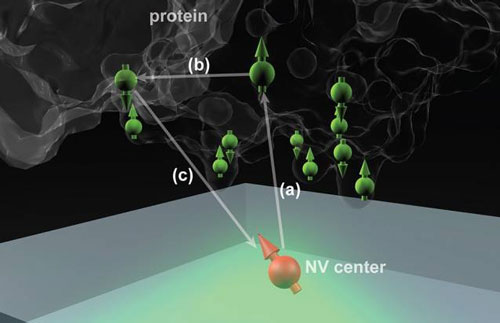 Nitrogen vacancy (NV) centers in diamond could potentially determine the structure of single protein molecules