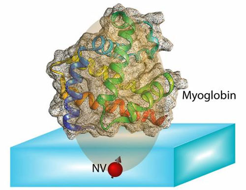 computing protein structures