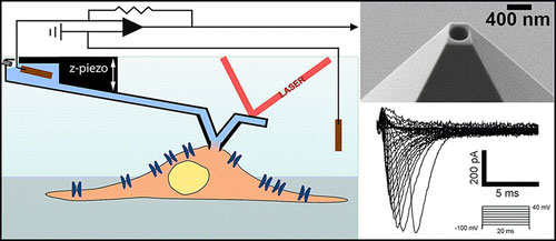 Force-Controlled Patch Clamp of Beating Cardiac Cells