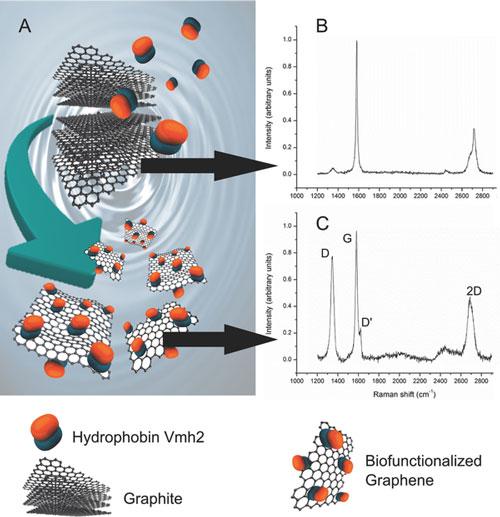In situ generation of biofunctionalized graphene