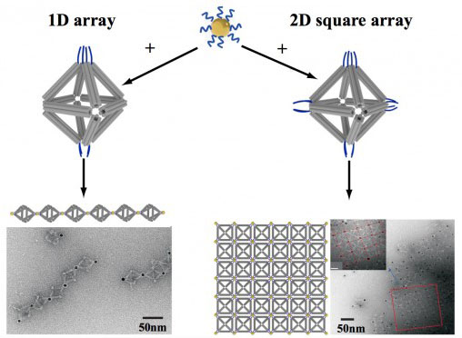 using octahedrons to link nanoparticles into one-dimensional chainlike arrays (left) and two-dimensional square sheets
