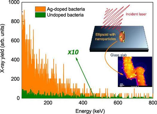 Nano Spiked Bacteria Emits Hard X-Rays