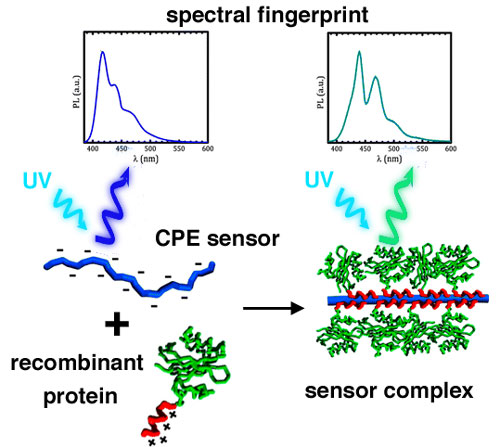fluorescent polymer makes deformation visible