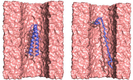 Protein Translocation through a Nanopore