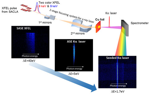 High coherent X-ray laser generated with pump ad seed XFEL pulses