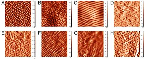 Diversity of Corneal Nanostructural Patterns among Arthropod Groups