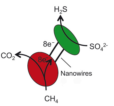 Archaea (red) yield eight electrons from the oxidation of a single methane molecule