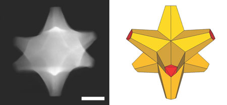 Tiny octopods catalyze bright nanotechnology ideas