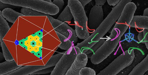 Adding a Metal Cluster to a Protein Nanostructure