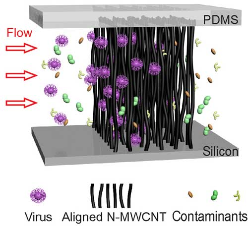 Illustration of size-based virus enrichment by the aligned carbon nanotube array