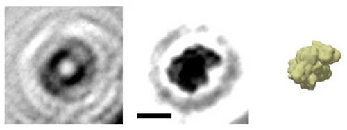 A holographic image of a single protein