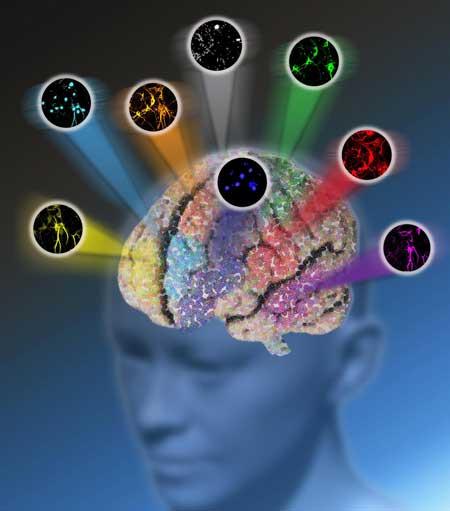 Microscopy Method Breaks Color Barrier of Optical Imaging