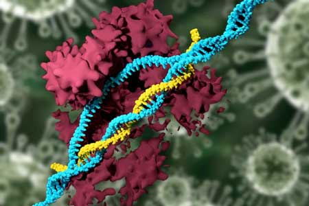 Genes Can Have Up To 80 Percent >> Crispr Carrying Nanoparticles Edit The Genome