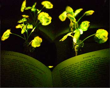Nanotechnology engineering of light-emitting plants