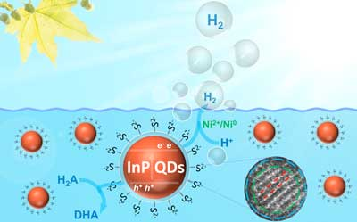 Schematic representation of photocatalytic hydrogen production with InP/ZnS quantum dots in a typical assay