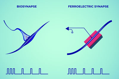 synapse and memristor