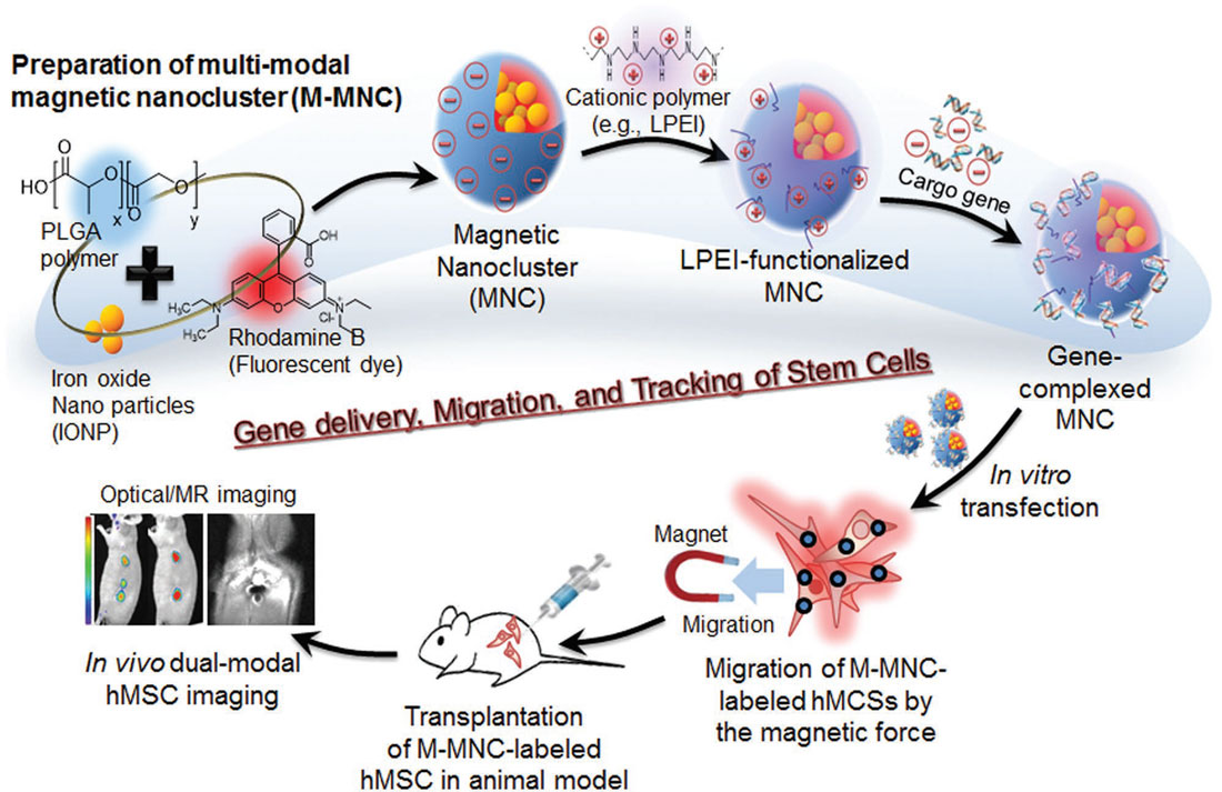New type of nanocomposite for stem cell therapy