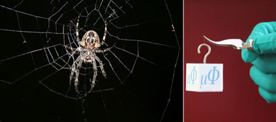 Adding metals makes spider silk significantly tougher