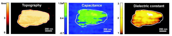 >Nanoscale dielectric imaging of a single layer of Purple Membrane on graphite