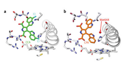 >The crystal structures of the binding pockets in StaP containing (a) CCA in which water (Wat644) is absent, and (b) CPA