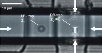 The integrated optical trap allows independent manipulation of trapped microbeads as shown in this view of two microbeads trapped by two different dual-beam traps