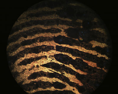 Optical microscope image of a fingerprint on brass