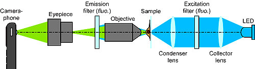 Schematic of the CellScope set up for fluorescent imaging. For bright field imaging, the two filters and LED are removed