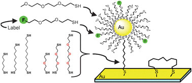 Fluorine-labelled thiols enable tracking of nanoparticle self-assembly