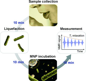 ultrasensitive detection of bacteria