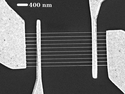 Scanning electron microscope image shows ten graphene nanoribbons between each pair of electrodes