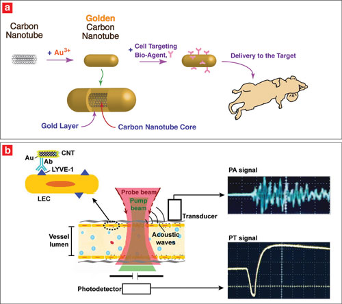 (a) Researches coated carbon nanotubes with gold and applied a cell-targeting bio-agent to deliver to the target. (b) They targeted endothelial LYVE-1 receptors with antibody golden nanotubes to produce photoacoustic and photothermal signals.