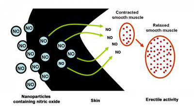 Nanoparticles Triggering Erectile Activity