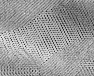 This electron micrograph shows a self-assembled composite in which nanoparticles of lead sulfide have arranged themselves in a hexagonal grid.