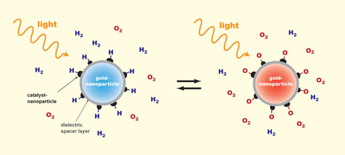 The plasmon resonance in a gold nanoparticle is exited with light so that the particle appears to have a color
