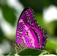 iridescent beauty of a butterfly