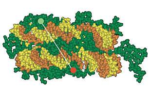 The DNA double strand (yellow and orange) is wrapped around a histone complex (green) consisting of eight subunits