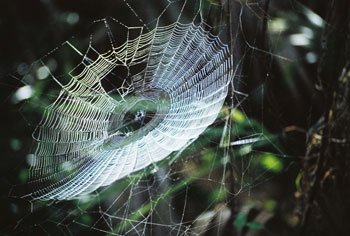 A sticky substance in spider webs may lead to the development of a new generation of biobased adhesives and glues that could replace some petroleum-based products