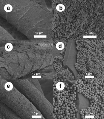 Images from an electron microscope show wool fibers coated with the silica nanoparticles that may improve wool's qualities