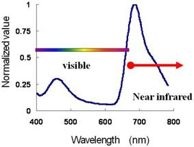 Emission spectrum of the near-infrared light-emitting protein and Cypridina luciferin in blood
