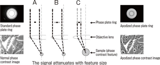 The principle of apodized phase contrast microscopy