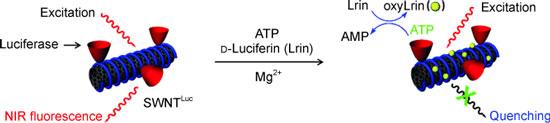 Carbon nanotube/luciferase conjugate for ATP detection in living cells