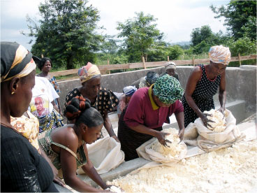 Women in Ghana work with cassava, which is cut, milled, pressed and dried