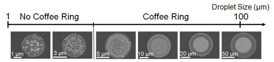 Coffee ring formation at decreasing droplet size. When using 100 nanometer-sized particles, the smallest coffee ring is about 10 micrometers in diameter, which is about one-tenth the diameter of a human hair.