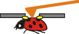 Rendering of a ladybug being recorded by the atomic force microscope (AFM) probe
