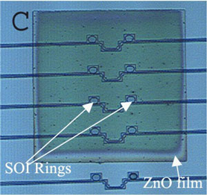 Optical microscope image of a rectangular ZnO nanoparticle coating covering 4 pairs of closely situated SOI microring resonators.